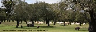 agrolesnictví1