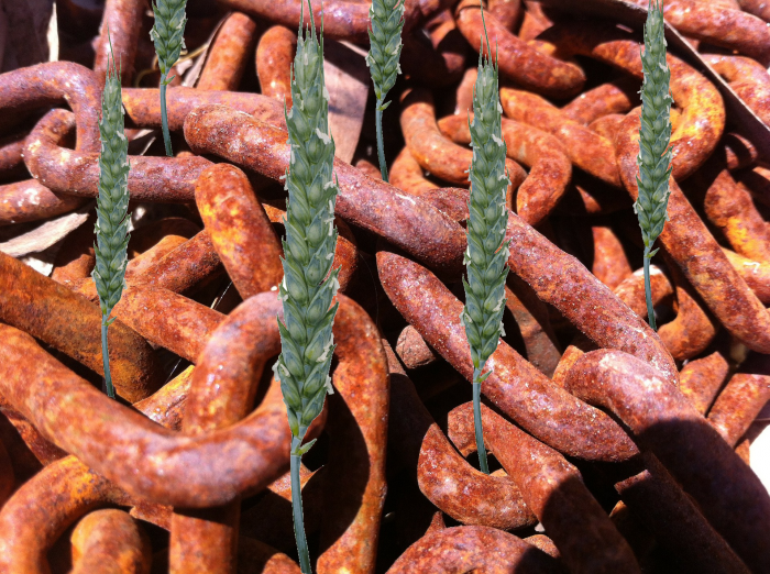 chain-grain