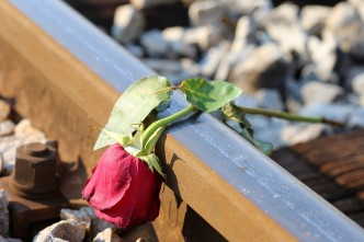 sad-red-rose-on-rail-3628852_1920