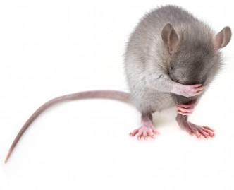 myš schovka